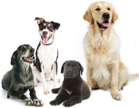 ***SAVE £2.00*** SUPER PREMIUM PUPPY, ADULT & SENIOR 2x2kg bag packs
